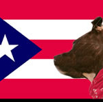 Puerto Rico and Pitbulls